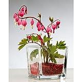 12er SET Teelichtgläser CUBE H. 10cm 10x10cm Glas transparent eckig Sandra Rich - 2