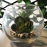 Annastore 12 x Teelichtglas Kugelvase rund klar Ø 9,5 cm Urban Jungle - Windlichter Glaswindlichthalter - 3